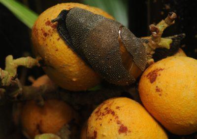 Výrazně žluté květy slouží i jako potrava