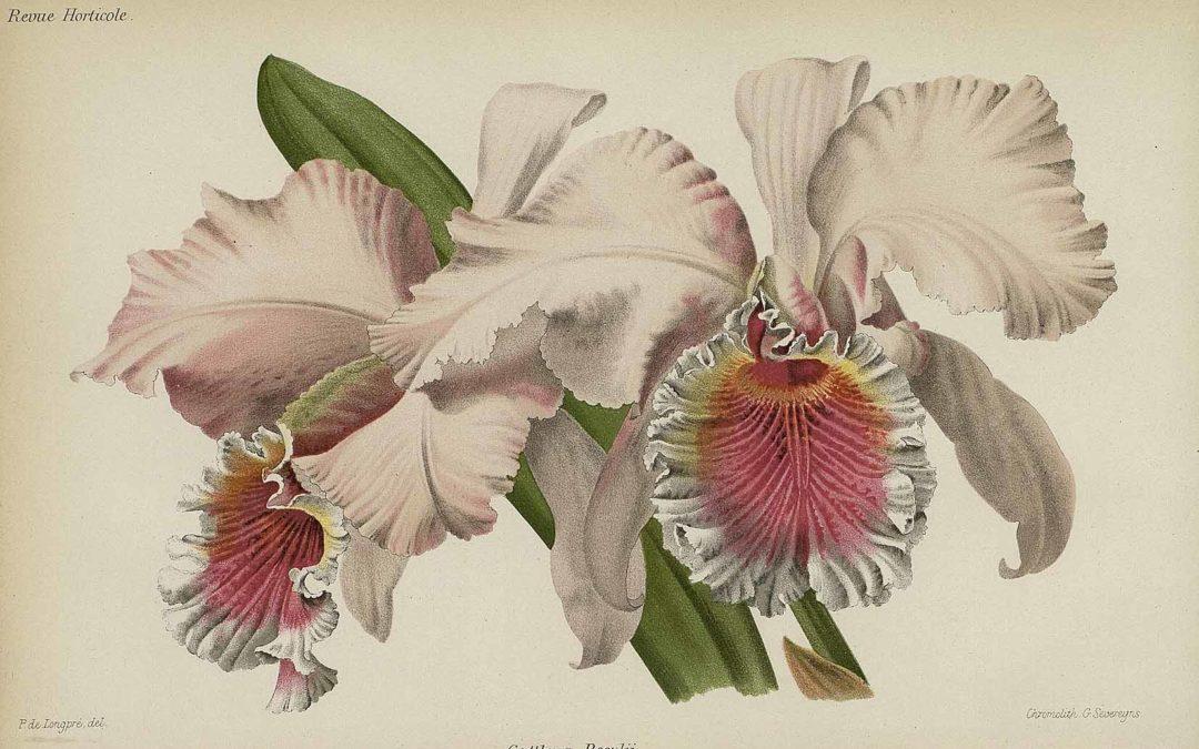 Znáte Benedikta Roezla –nejslavnějšího českého lovce orchidejí?