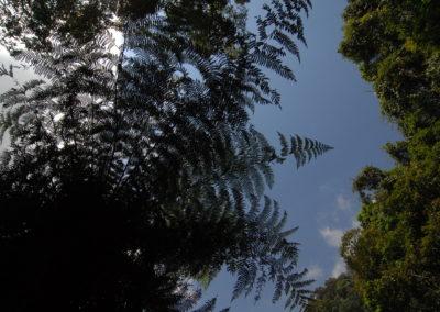 Pod korunami stromovich kapradin - Mexiko